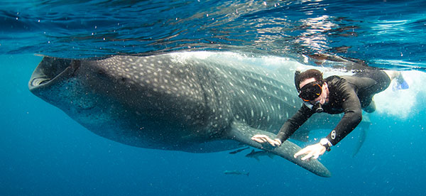 swimming-with-whale-sharks-oslob