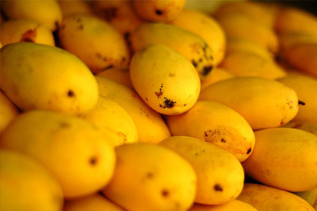 cebu mangoes