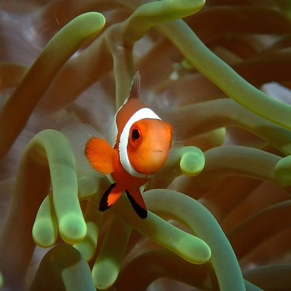 Basdiot Diving | Photo by Cebu Dive Centre