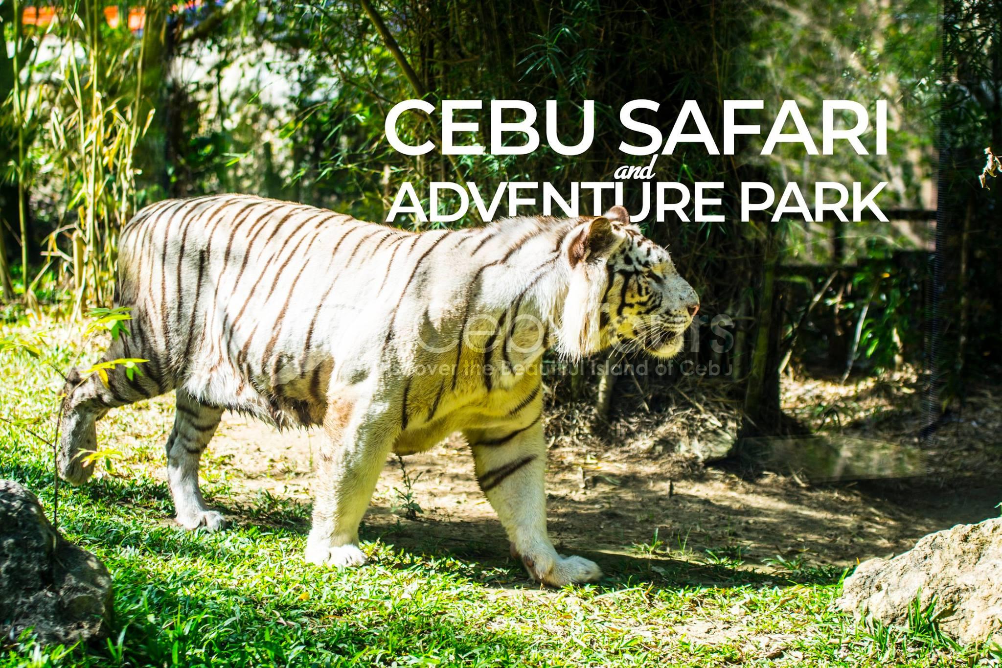 Photo by Cebu Tours