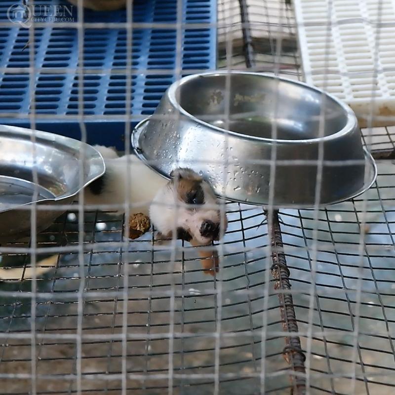Newborn puppy from Cebu City Pound | Photo by Queen City Cebu