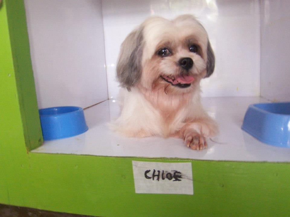 Photo from Shihpomapoo Dog Hotel
