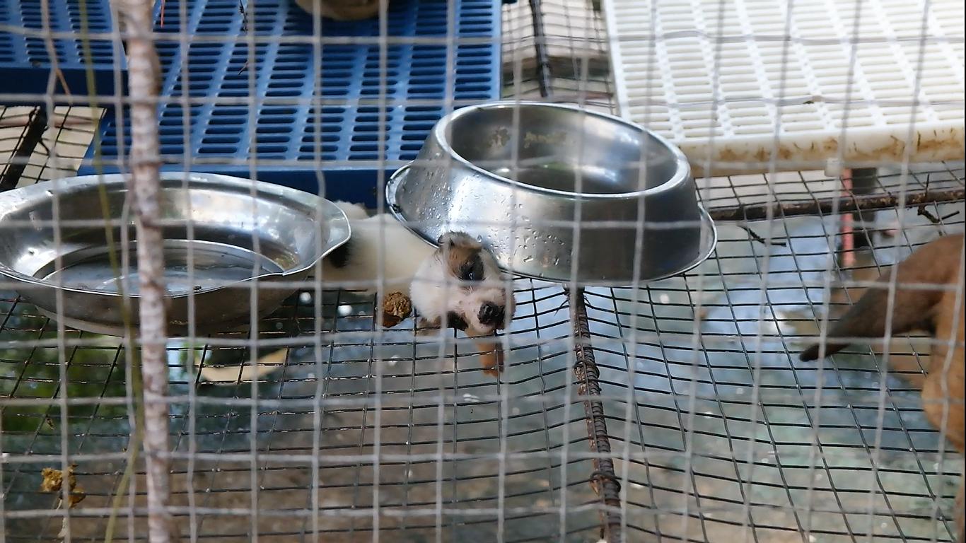 pup (2)