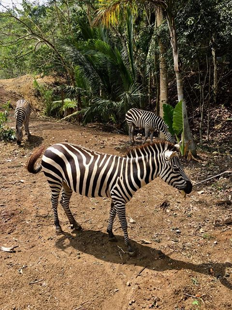 Cebu Safari and Adventure Park