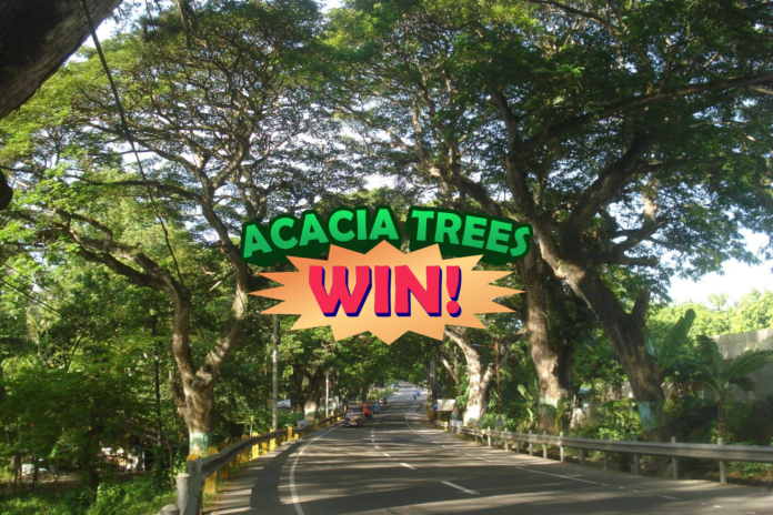 carcar acacia trees win