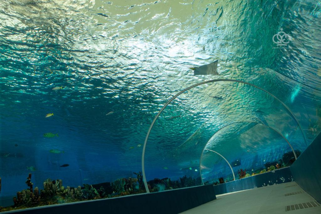 oceanarium cebu ocean park