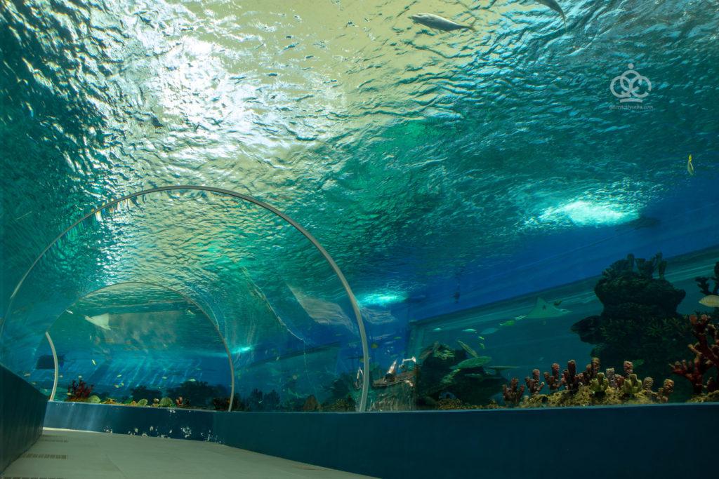 oceanarium cebu