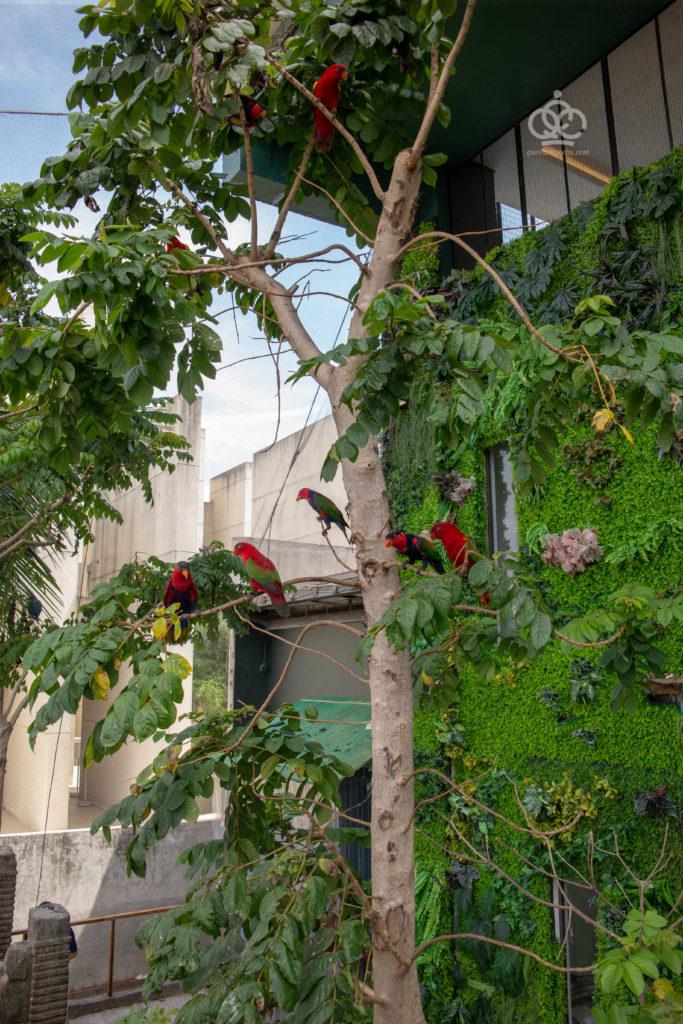 bird feeding cebu ocean park