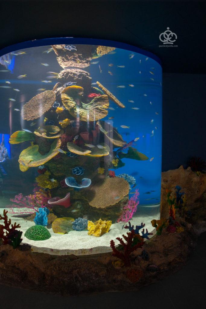 colorful corals cebu ocean park