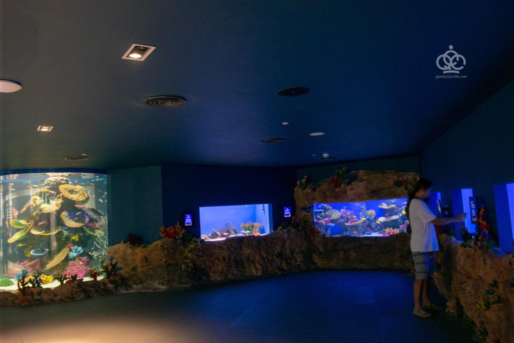 dark room cebu ocean park