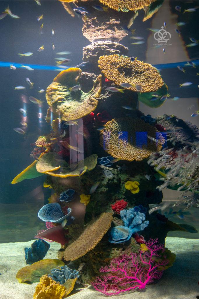 artifical corals cebu ocean park