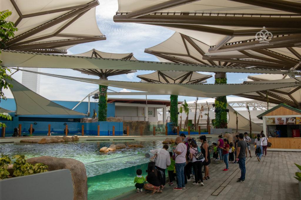 stingray feeding cebu ocean park